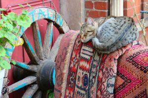 cat-1095723_640