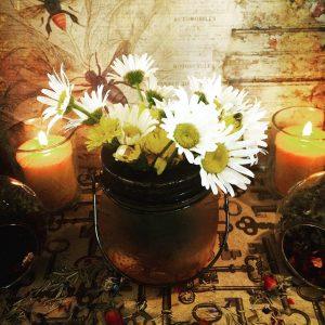 flower-2416883_640